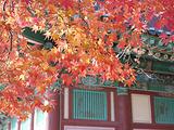 釜山旅游景点攻略图片