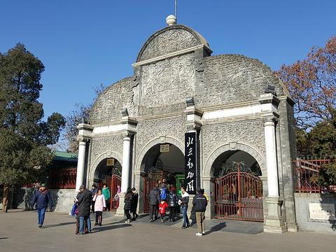 北京动物园旅游景点图片