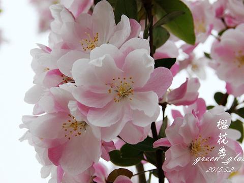 龙王塘樱花园旅游景点图片