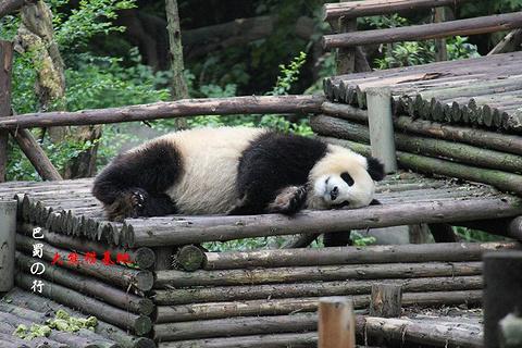 熊猫谷的图片