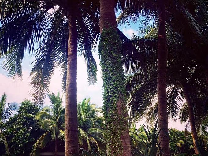 海口观澜湖度假酒店图片