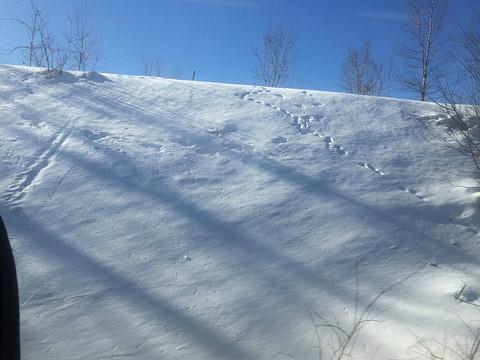 国营泷野铃兰丘陵公园旅游景点图片