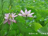 莲花旅游景点攻略图片