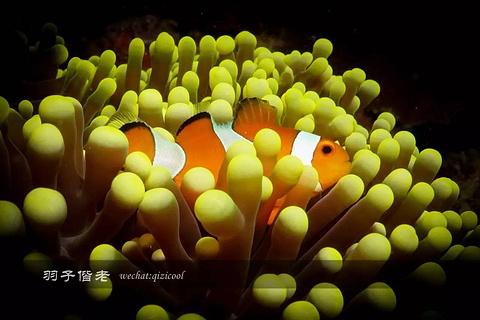 爱妮岛潜水中心
