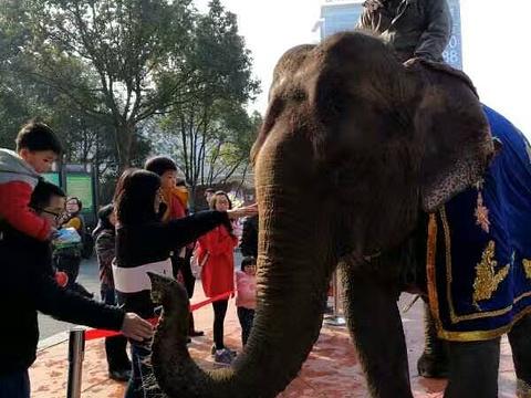 杭州野生动物园旅游景点图片