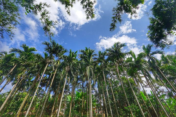 海南岛/从这里继续往东走,还有个雨林谷,往北有条小路,可以通往鸣凤...