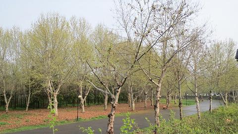 南岸嘴江滩公园