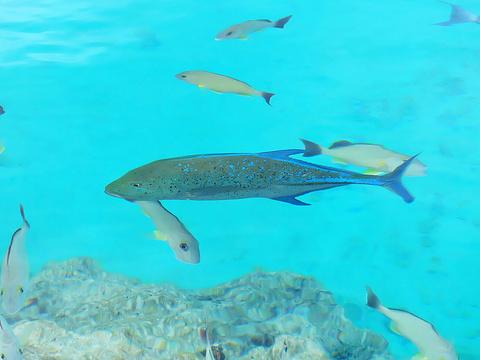 Lagoonarium de Tahiti旅游景点图片
