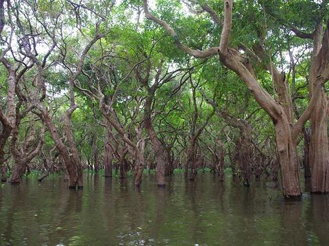 洞里萨河旅游景点图片