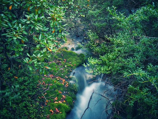 """""""喜欢这种小景,仿佛林中仙境,流水丝滑,青苔松软,好像是小精灵的住所。真是联想太丰富。人是真的少_五彩池""""的评论图片"""