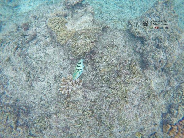 岛上浮潜(玛玛努卡岛)图片