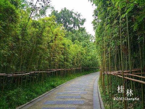 虞山公园的图片