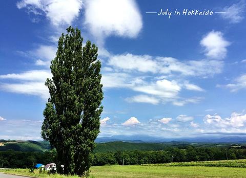肯和玛丽之树旅游景点攻略图