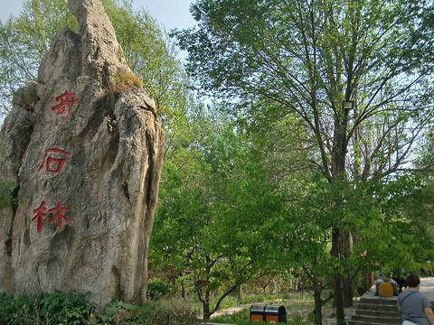元古奇石林旅游景点图片