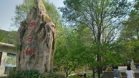 毛家峪长寿度假村元古奇石林旅游景点攻略图