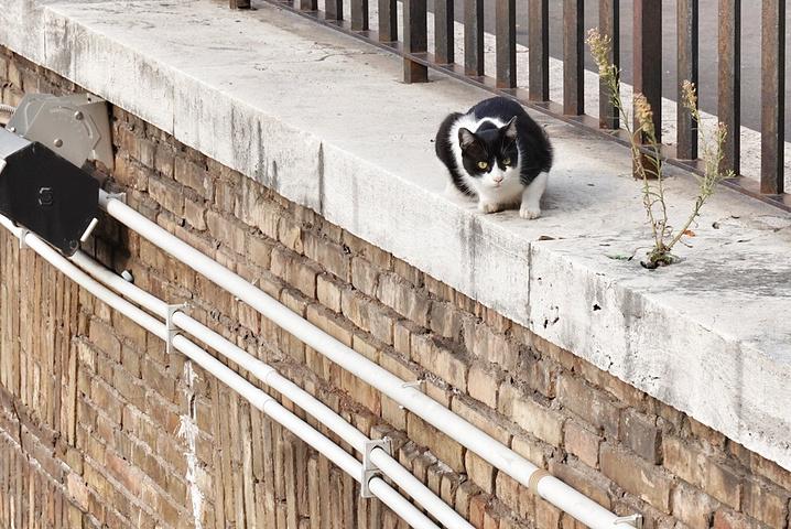 """""""这里本身就是一个古遗址,如今成为了猫咪的家园_银塔广场""""的评论图片"""