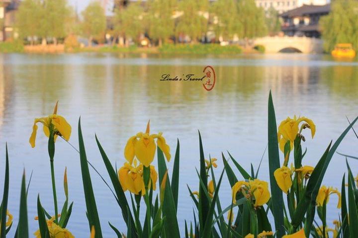 """""""虽然是很好很好的意图,但是拍照的时候有一点煞风景。这么多美丽的黄菖蒲围绕在河边。整体是蓝色的装修好看_真如禅寺""""的评论图片"""