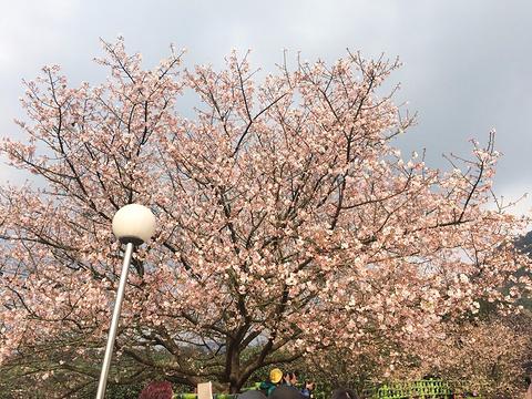 淡水天元宫旅游景点图片