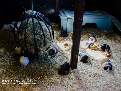 欧登塞动物园旅游景点图片