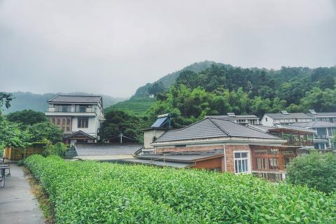 龙井问茶旅游景点攻略图