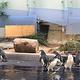 墨尔本动物园