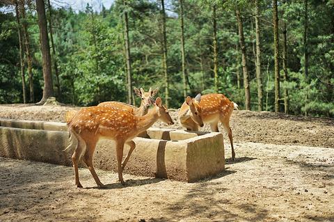 云南野生动物园的图片