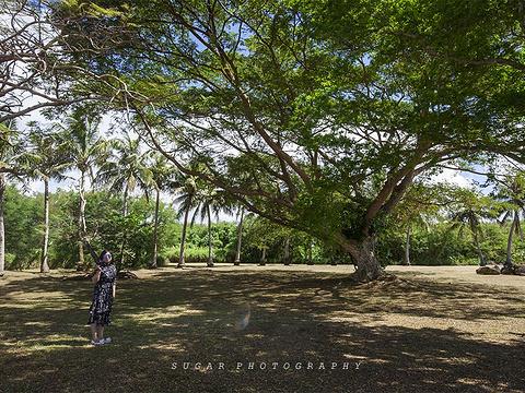 天宁岛旅游景点图片