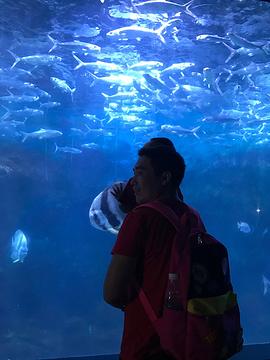 深圳海洋世界极地馆旅游景点攻略图