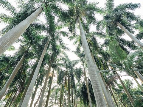 维多利亚公园旅游景点图片