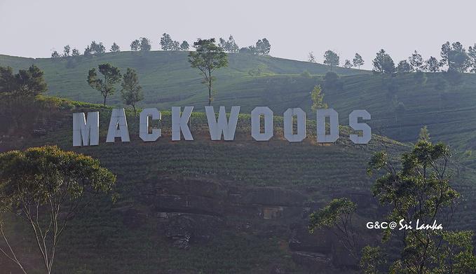 Mackwoods茶厂图片