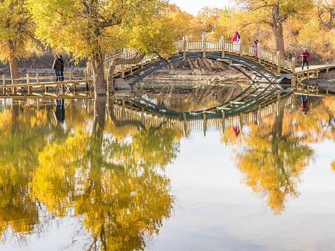 金塔沙漠胡杨林景区旅游景点图片