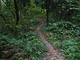 安岳旅游景点攻略图片