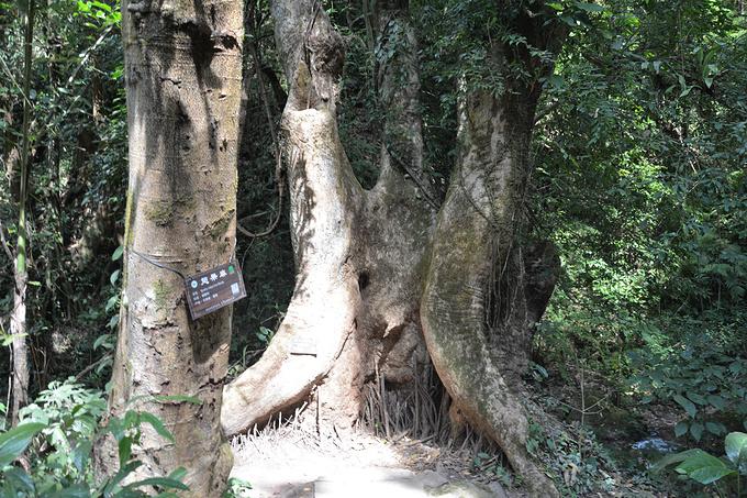 莫里热带雨林景区图片