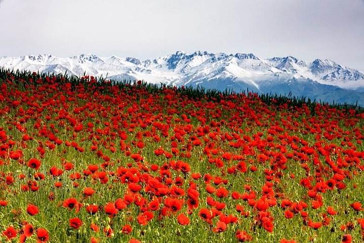 """""""让人感受最震撼的自然与原生态之壮美,一个花海的世界、一个迷人的仙境!图片来自网络。图片来自网络_杏花沟""""的评论图片"""