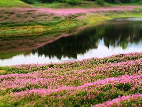 龙湾国家湿地公园旅游景点图片