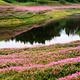 龙湾国家湿地公园