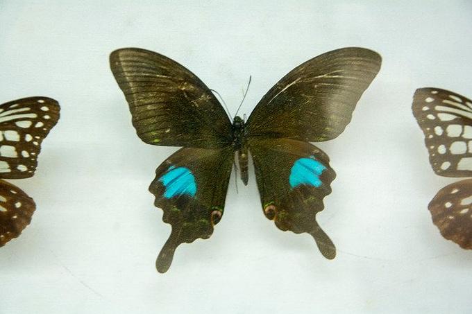 蝴蝶博物馆图片