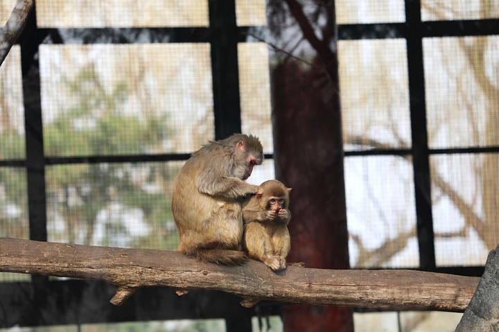 山猴子鸟_2020外地人去的话最好避开周末和假期,本地人办着公园年卡周末 ...