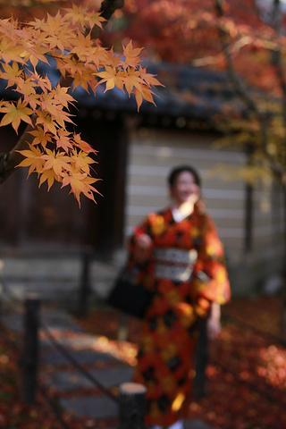 """""""...、欧洲、日本山区,或者北京郊区喇叭沟门看过的那种大气的山林秋景相比,是另一种让人震撼的园林秋景_永观堂""""的评论图片"""