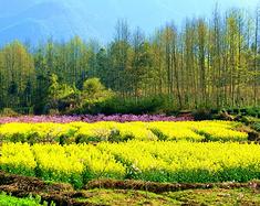 夏宁葆在安徽徽州地区春游之一。