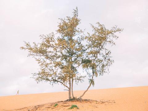 红沙丘旅游景点图片