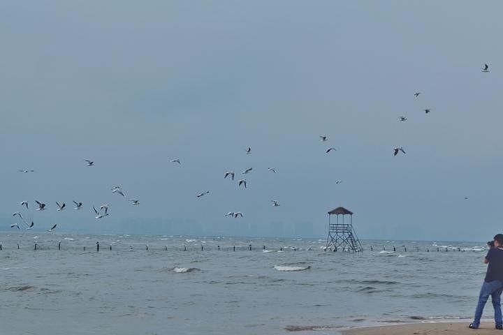"""""""虽然叫鸽子窝公园,但在这里,鸽子却没有几只,海鸟倒是很多,不时的从头顶飞过,落在沙滩上,或落在船舷上_鸽子窝公园""""的评论图片"""