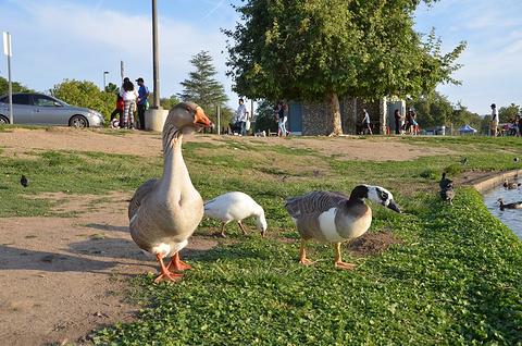 巴柏亚湖公园