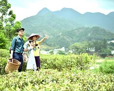 采茶•寻味•手艺 一家人的潮州之旅