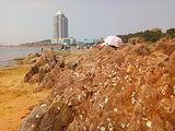 青岛旅游景点yabo2010.com图片