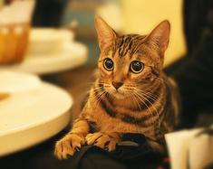北京4个撸猫圣地!作为猫奴的你还在等什么?