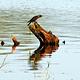 米内日亚国家公园