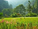 铜仁旅游景点攻略图片