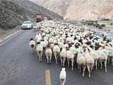 阿勒泰旅游景点攻略图片