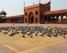 23天游遍德里、阿姆利则等北印城市